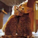 2匹のネコ